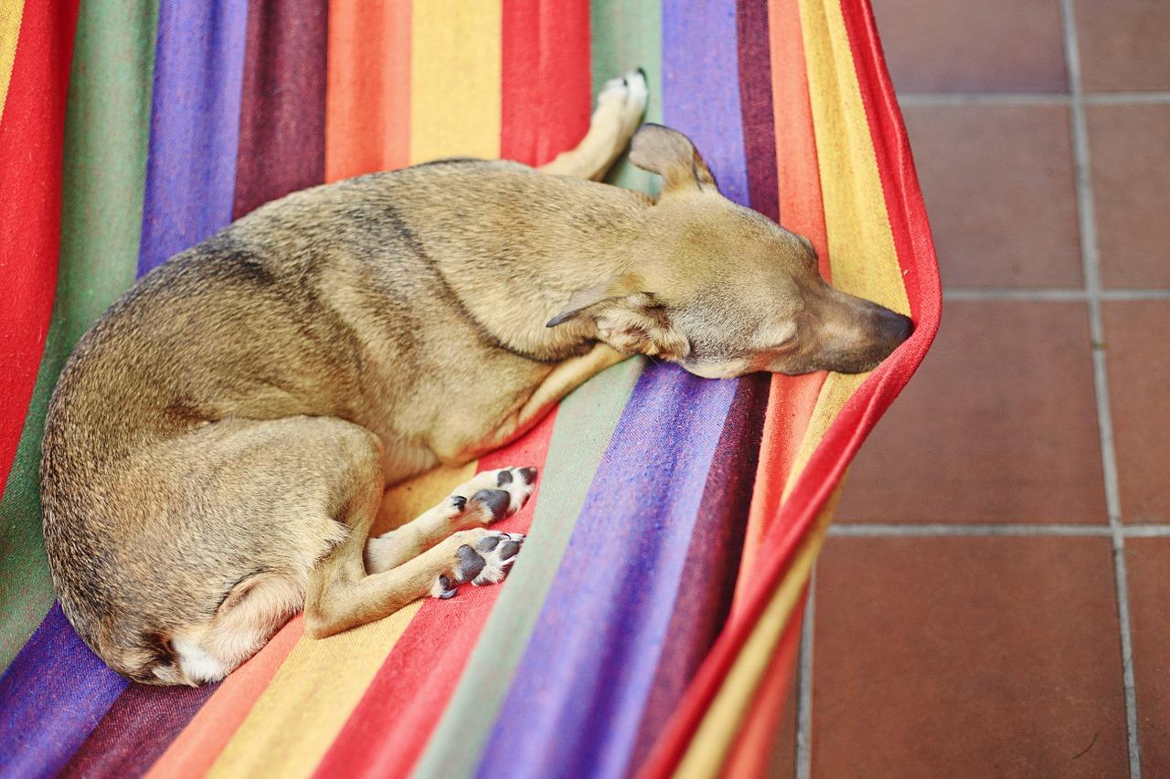 hamak w domu, pies, wypoczynek